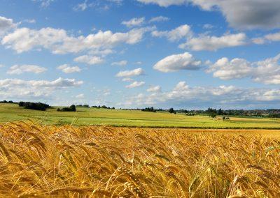 the-summer-fields